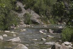 Berijpte breedscheenjuffer, Platycnemis kervillei, habitat
