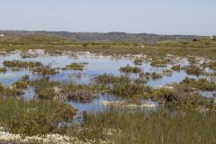 Habitat - Iberisch lantaarntje - Ischnura graellsii