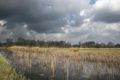 noordse winterjuffer, Sympecma paedisca, habitat