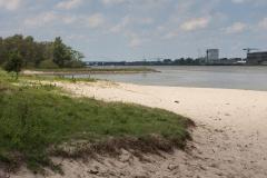 Rivierrombout, Gomphus flavipes, habitat, Oudendijk, Groesplaat